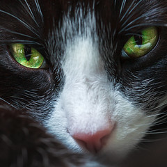 Kitty green eyes (Barry_Madden) Tags: pet cute green closeup cat eyes kiity