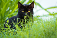 Negro Gato (Marilton Trabuco) Tags: brasil gato bahia felino viajem itacar gatopreto frenteafrente
