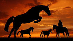 Silhouette cowboy with horses in the sunset (sacmclubs) Tags: ranch morning sunset red wild vacation sky people horse orange cloud sun male men nature field animal silhouette set sunrise trek landscape fun outdoors evening cowboy ride action weekend farm country dream dramatic illustrations competition horsemen adventure domestic western czechrepublic steed rider equine active horseriding courage discover