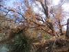 CIMG6452 (kazadmanesh) Tags: و بهار خشکسالی