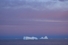 In The Twilight Zone  Natural Arch Sculptured Iceberg Antarctica (eriagn) Tags: travel pink blue sea summer cloud snow seascape ice expedition nature beauty landscape photography twilight arch purple violet antarctica science calm glacier southern hues remote serene polar exploration isolated icebergs longitude vast naturalarch tabular rosssea eriagn ngairelawson ngairehart screamingsixties shriekingsixties