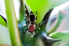 2014 - Parque Lage, Sesso Macrofotografia III, RJ, Brasil, Outono. (Wilson Moura) Tags: macro brasil riodejaneiro rj outono parquelage macrofotografia humaita sessoiii sessomacrofotografiaiii