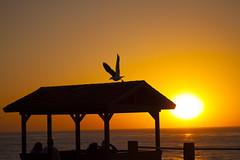 San Diego (Marielle B-R) Tags: california ca sunset silhouette cali canon la san diego 5d jolla marielle reiersgard