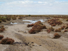 A little rain around Lake Eyre (spelio) Tags: trip travel lake home australia outback sa eyre 2011