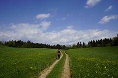 _DSC6465 (Nonesmanneslond) Tags: slovenia slovene kitnivhr