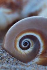 Day at the beach 01 (djshanu) Tags: sea beach shell seashell shallowdepthoffield shallow dof depth depthoffield fibonachi 100 mm 100mmf28 wollongong australia