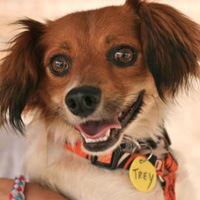 Adopt Trey from Austin Pets Alive!