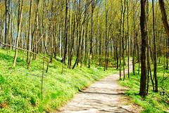 trail (Tony Faiola) Tags: camping up michigan upperpeninsula lakesuperior grandmarais