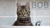 BOB (Oliver Pietern) Tags: cat canon germany deutschland kitty domestic nrw katze paws shelter suchen oberhausen tierheim homeles tierschutz katzenhilfe