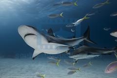2014 03 TIGER BEACH-2996