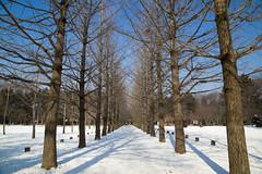 Nami Island (paredetel) Tags: winter island korea sonata nami