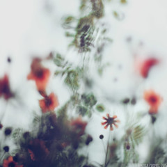 Windfall (Tanjica Perovic) Tags: flowers nature abstract botanical blur shallowdof soft silky