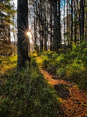 Forest trail, Norway (Vest der ute) Tags: landscape rogaland haugesund norway sunstar g7x trees fav25