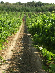 Vigneron (Annie in Beziers) Tags: man france green june earth working soil vineyards alcohol wildflowers vignes walkingthedog vigneron winegrower puisserguier annieinbziers