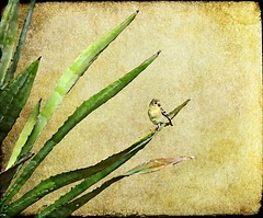 I'm Like A Bird (Az Karen...busy) Tags: plant bird texture painting desert boycethompsonarboretum yellowbird superiorarizona tatot lenabem