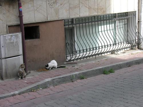 Itt egy aktív macska hierachikus étkezést láthatunk: várakozás, evés, majd alvás