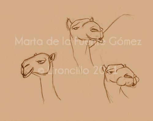 Bocetillos de camellos