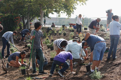 More Planting TM