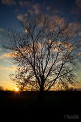 warm glow (dhtuan) Tags: sunset tree nature silhouette landscape warm glow 14 35l canon5dmk2 dhtuan
