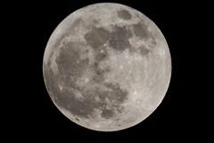 SuperMoon - 2000mm, no crop (Nick / KC7CBF) Tags: moon scope super telescope celestron c5 supermoon