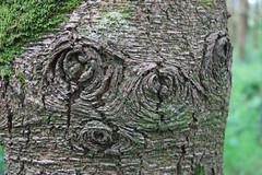 Tree Wizard (Ken Meegan) Tags: ireland treeface tinternabbey cowexford treewizard 652012 tinternwood