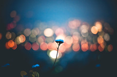(jim_213) Tags: light flower bokeh sony a55 sal35f18