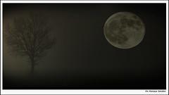 Amica Luna (sandrodemo66) Tags: luna albero sandrodemo66