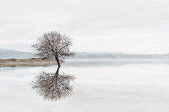 Tree reflection (Nick-K (Nikos Koutoulas)) Tags: lake reflection tree fog minimal greece  kozani