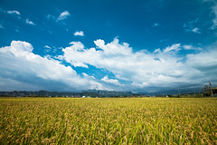 (digital_trance) Tags: canon landscape landscapes countryside rice taiwan sigma fields  ricefields     lancscape  40d canon40d  5dmarkii 5d2  5dii canon5dmarkii eos5dmarkii canon5d2 beautyoftaiwan