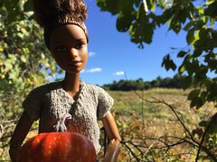 Pumpkin Picking (Foxy Belle) Tags: doll barbie made move 2016 yellow top black outside nature leaves sweater fall