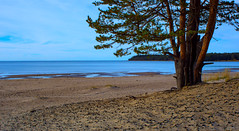 October blues (Joni Mansikka) Tags: autumn sea sand beach shore seaside nature sky clouds trees pine outdoor landscape balticsea yyteri pori suomi finland