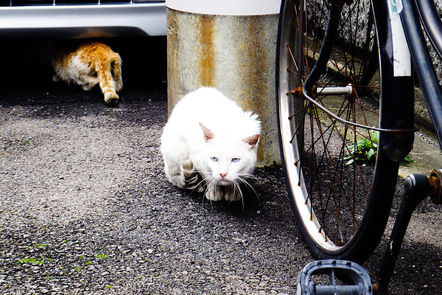 Today's Cat@2011-06-11