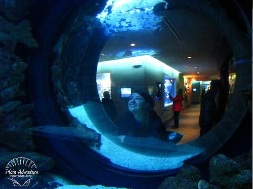 Looking at an aquarium