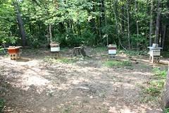 dan's four hives