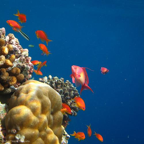 Malediven 2010 -2186