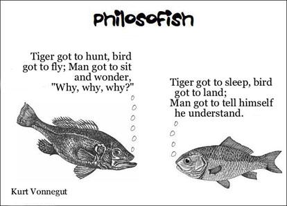 philosofish 30 small