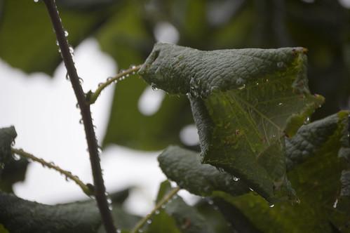 Rain three