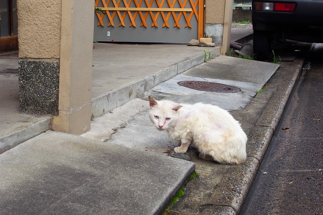 Today's Cat@2011-07-08