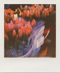 market tulips (daveotuttle) Tags: flowers polaroid sx70 tulips farmersmarket px70 impossibleproject bitofsnakeskingoingonhere mightrescanin24hrs batch911