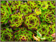 My Garden 07 (Graham'M) Tags: flowers plants nature garden flora my