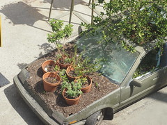Planted car (Anika Malone) Tags: flowers plants walking losangeles tour farmlab bigparadela bigparadela2012