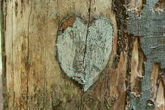 (danieladenkova) Tags: wood tree film heart cut walk kodakektar100