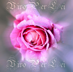 Vivo Per Lei (Jenny Rainbow) Tags: music love rose drops song radiating pinkrose lovesong vivoperlei lamusica iamwithyouthereforeinanyplacejustwithyou