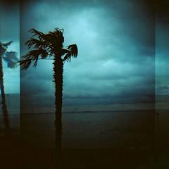 Southend on Sea (nick richards art) Tags: winter sea england sky seascape colour tree 120 film beach water weather thames clouds landscape coast seaside lomo lomography exposure windy overcast double palm estuary 120film diana coastal analogue dianaf essex southend overlap analoguephotography