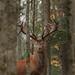 Heiko # 1 wilderness 144
