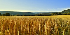 Rastrojo (thoskar) Tags: landscape nature canyon ebro burgos summer yellow view paisaje spain cao trigo wheat