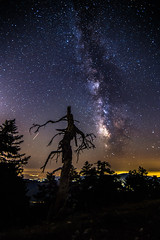 Milky Way rises over the dead tree (Vagelis Pikoulas) Tags: milky way milkyway long exposure stars star space universe galaxy night nightscape mountains mountain mount kithairwnas kithaironas vilia greece tree trees forest sky autumn october 2016 canon 6d tokina 1628mm view