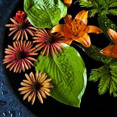 thirst (helveticaneue) Tags: flowers orange plants black green water leaves june gardens daisies garden pennsylvania wayne floating lilies gerbera chanticleer 2011 chanticleerfoundation