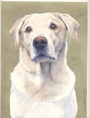 "Dillon - watercolour • <a style=""font-size:0.8em;"" href=""http://www.flickr.com/photos/64357681@N04/5866490191/"" target=""_blank"">View on Flickr</a>"