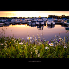 time 04:07:14 (stella-mia) Tags: flowers summer sun lake reflection norway sunrise hamar 2470mm hightlight canon5dmkii lakemjsa
